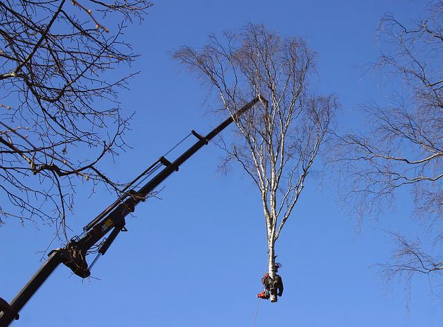 Arborist at workArborist