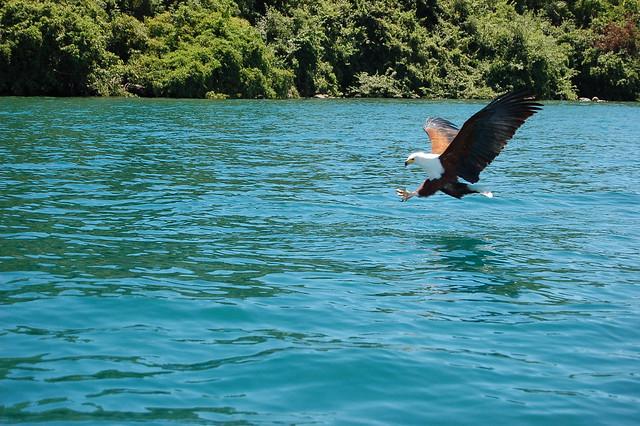Fish eagle lake malawi flickr photo sharing for Eagle lake texas fishing