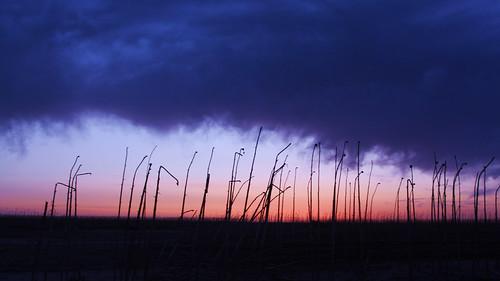 风光 日出 摄影 沙漠 内蒙古草原 戈壁滩