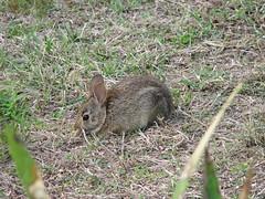 3848 Munching Rabbit