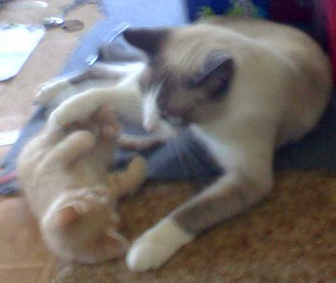 Simba being trounced by Celeborn