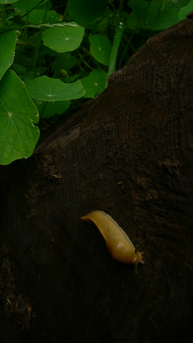 california travel summer wet animals humboldt rainforest wildlife slug bananaslug