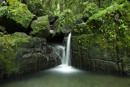 usa white green fall water pool rain forest river puerto waterfall pond rainforest stream el falls rico explore mina coco national tropical lush pure yunque explored mopr jamesogorman flickrcolour