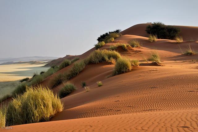 Namib Desert - Sossusvlei Dune Elim