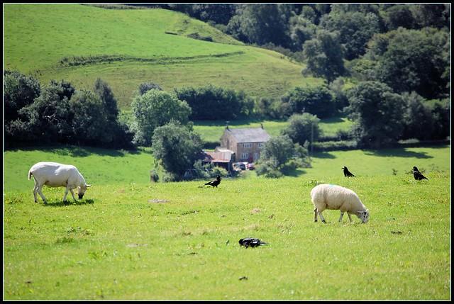 Pecore & Case