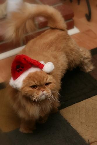 Ho ho ho / meow meow meow