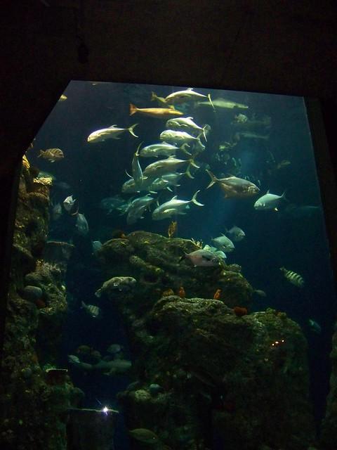 Visit To The South Carolina Aquarium Charleston South