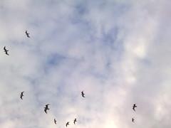 Sea gulls overhead