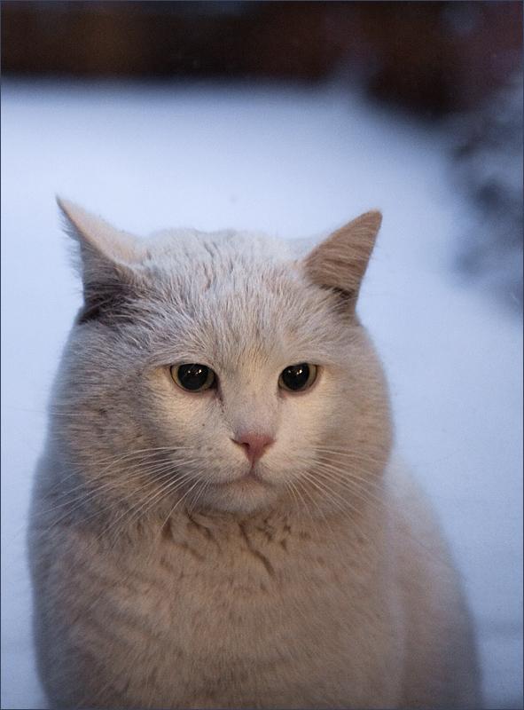 Ice-Cat