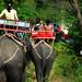 Elephant Farm, Ratchaburi