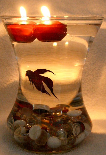 Beta Fish Bowl Wedding Reception Centerpiece