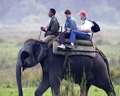 Elephant Safari At Corbett National Park