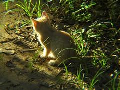 Loney Kitten