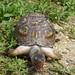 Turtle-3