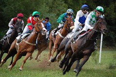 eventing(0.0), trail riding(0.0), endurance riding(0.0), horse trainer(0.0), animal sports(1.0), horse racing(1.0), racing(1.0), equestrian sport(1.0), sports(1.0), race(1.0), jockey(1.0),