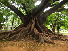 woodland, deciduous, root, branch, tree, plant, produce, trunk,