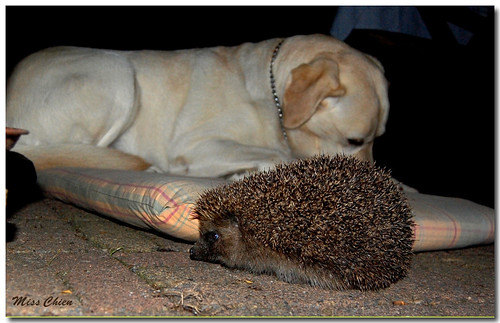 Maybe meets a hedgehog...