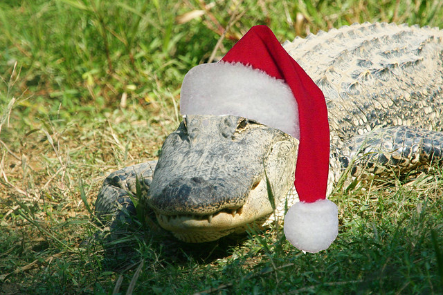 Alligator Christmas Images - Reverse Search