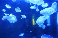 reef(0.0), animal(1.0), jellyfish(1.0), organism(1.0), marine biology(1.0), invertebrate(1.0), marine invertebrates(1.0), aquarium lighting(1.0),