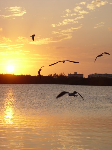 sunset seagulls birds bay florida sarasota happynewyear vamofl