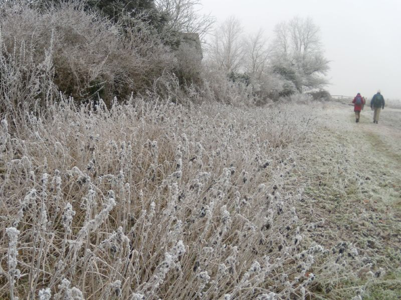 Frosty walkers Wanborough to Godalming
