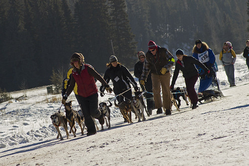 3216535645 c7f85dbc02 Nice Sled Dog Racing photos