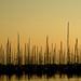 Sunset boats (EXPLORED)