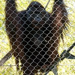 Los Angeles Zoo 075