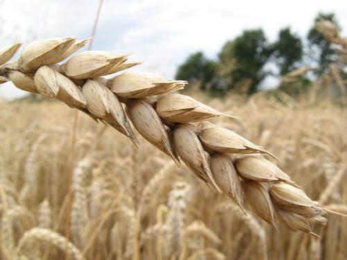 Si el grano de trigo no muere, es imposible que nazca fruto