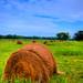Hey, Hay! by freddynorman