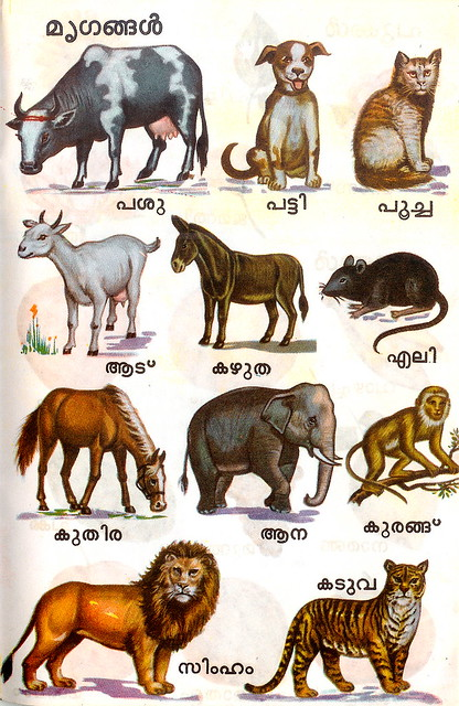 all animals names - photo #39