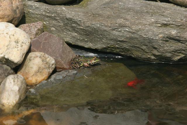 Frosch in der fr hlingssonne flickr photo sharing for Wassertiere teich