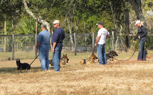 Great Ideas To Help You With Your Training Your Dog 2