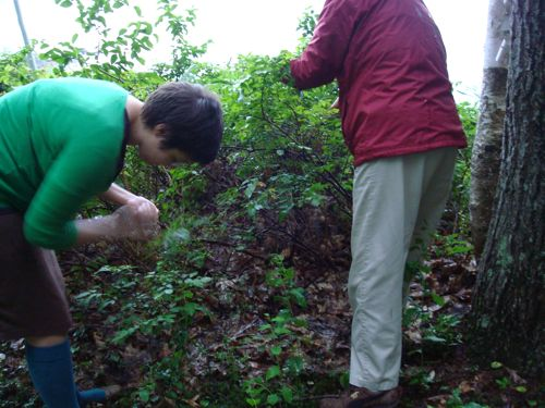 Elise & Ginny picking blueberries