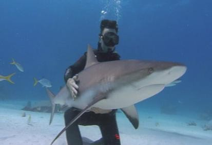 touching a caribbean reef shark