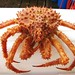 Golden King Crab (Lithodes aequispina)