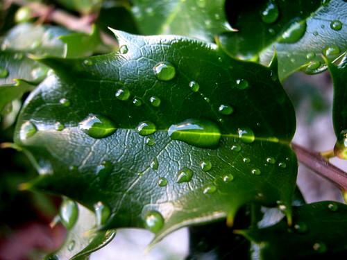 Leaf cuticle