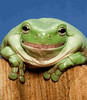 frog_czd5h6qk