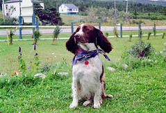 1997/08/29 - 17:50 - His name is Shakespeare. The dog kept at Ocean Acre Inn.