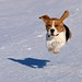 Super-Beagle flying!