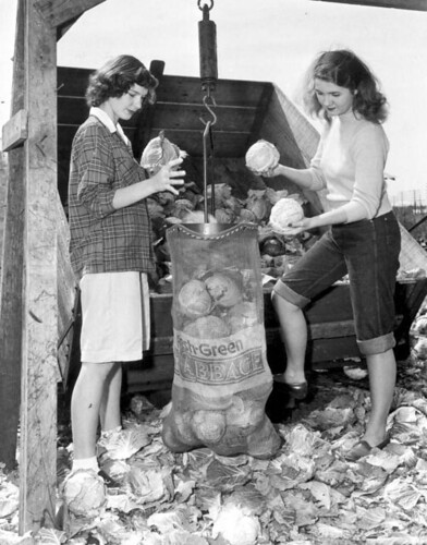 Vintage photo of young women harvesting cabbage