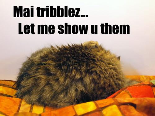 tribblez