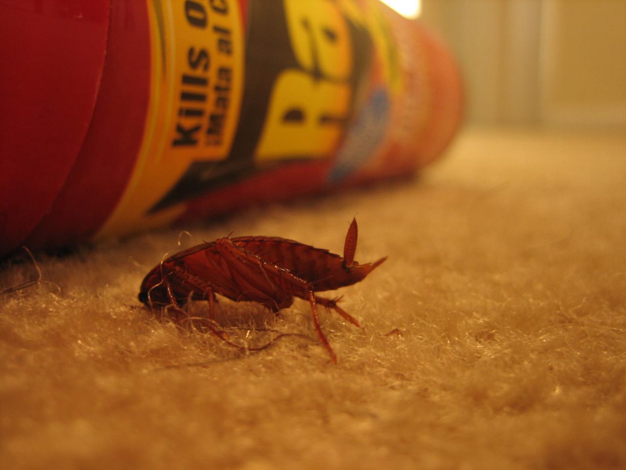 Ловушки для тараканов своими 57