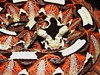 "<a href=""http://www.flickr.com/photos/char1iej/2655805663/"">Photo of Bitis nasicornis by Charlie J</a>"