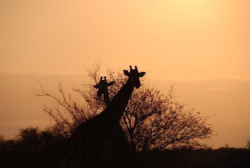 Sud Africa dalla vita di Tiziano Terzani