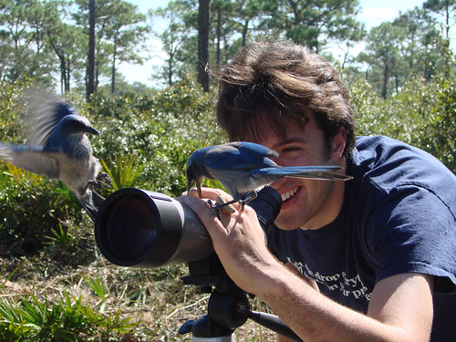 Florida Scrub-Jays and Joe