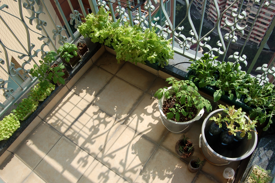 Urban farming and gardening tips for small spaces - Small space farming image ...