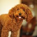 dog image, photo or clip art