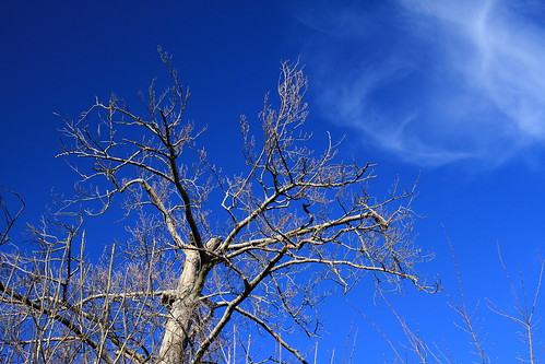 Skeleton Tree and Clouds