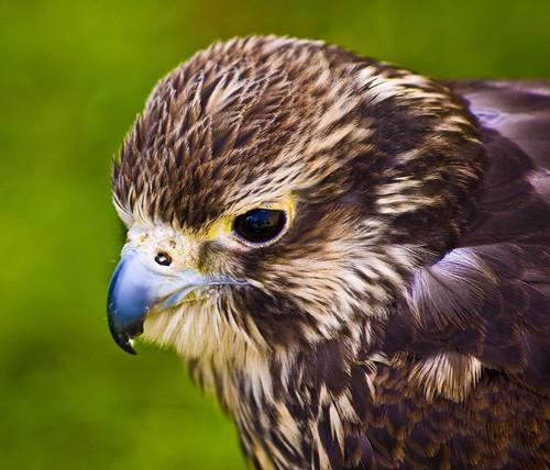 Bakewell Owls 4 June 2011